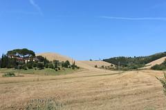 Campagna fiorentina (danielebenvenuti) Tags: trees sky italy alberi canon landscape reflex italia wheat hill cielo tuscany toscana azzurro grano scie canon700d