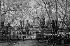 Ghost Path (majestiele) Tags: trees urban buildings doubleexposure greenwich multipleexposure flux canarywharf ghosting fmp finaloutcomes