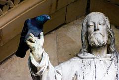 so i said to him (pamelaadam) Tags: building bird nature animal statue digital geotagged scotland spring pigeon faith may fotolog highland spirituality 2009 kirk inverness standrewscathedral thebiggestgroup geo:lat=57474586156768424 geo:lon=4229108691215515