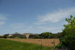 Farm near Roman Town of Pollentia, Alcdia, Majorca, Mallorca, Balearic Islands, Espaa, Spain (hkkbs) Tags: espaa history archaeology spain espana mallorca majorca balearicislands illesbalears alcdia romantownofpollentia