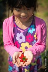 Strawberry Picking 2012 (Nao Okawa) Tags: red sky sun green sunshine june star newjersey spring holding hands strawberry nikon heart farm harvest nj sunny blueskies picking hackettstown necterine donaldsonfarms nikond800