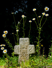 Pushing up the Daisies. (Tony Brierton) Tags: ireland scenery wexford tinternabbey cowexford wildcamping 30613 saltmills