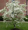 """Dogwood White • <a style=""""font-size:0.8em;"""" href=""""http://www.flickr.com/photos/101656099@N05/9736797246/"""" target=""""_blank"""">View on Flickr</a>"""