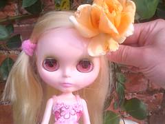 Last rose of summer.