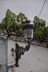 Verode en los tejados de La Laguna, Tenerife (Pablo F. J.) Tags: city light planta heritage farola ciudad vegetation urbano worldheritage vegetación centrohistórico patrimonio patrimoniomundial verode patrimoniodelahumanidad macaronesia historiccore arquitecturatradicional humangeography geografíahumana aeoniumurbicum