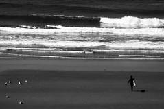 Into the Waves (wenzday01) Tags: statepark park travel bw beach nature oregon nikon waves surfer or monotone adobe surfboard coastline oregoncoast nikkor cannonbeach ecola ecolastatepark lightroom d90 indianbeach nikond90 18105mmf3556gedafsvrdx