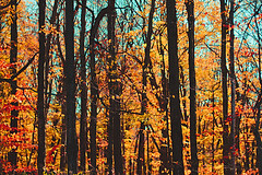 autumn woods (Shandi-lee) Tags: lighting blue autumn trees light shadow red sky orange brown sun sunlight ontario canada black cold color colour tree green fall nature colors beauty leaves lines sunshine weather silhouette yellow forest canon season landscape leaf woods october scenery colorful aqua warm soft branch colours afternoon dof natural branches cyan warmth naturallight sunny scene line depthoffield simplicity colourful raglan sunlit simple twigs 50mmf14 warmtones canoneos7d shandilee