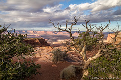 Canyonlands National Park (Squirrel Girl cbk) Tags: usa utah deadtree canyonlandsnationalpark snag puffyclouds coloradoplateau
