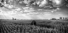 L'intruso (the intruder) (Goethe58) Tags: italy panorama landscape modena hdr paesaggio carpi emiliaromagna ngg wonderfulworld flickraward hdrpanoramas hdraddicted nikonflickraward altrafotografia stitchedpanoramua