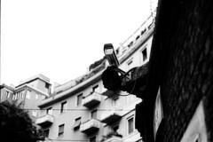(LICHTHOF-CM) Tags: camera italien italy white black milan building film analog us big nikon europa europe italia brother milano watch watching spy weiss schwarz kamera fm2 überwachung mailand lichthof lichthoftumblrcom