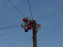Just Balloons. 34/365. (Sunchild57 Photography. Taking a break.) Tags: balloons project365 21stbirthdayballoons 322014