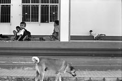 * (Sakulchai Sikitikul) Tags: life street leica bw dog film zeiss children thailand 50mm kodak trix streetphotography 15 400 carl songkhla ttl m6 hatyai 085