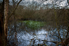 The swamp (Pti Loup) Tags: lake france tree nature water 35mm canon pond eau des arbres swamp 5d marsh marais mere forges belfort etang