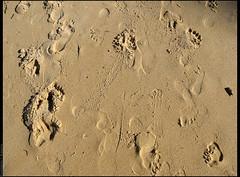 areia (emersonik) Tags: sand areia trace traces footprints sands pegadas footprint rastro footmarks pegada footmark rasto areias rastros hardlight rastos