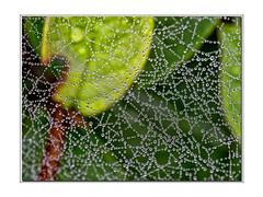 Like silver beads (Maudnait) Tags: artistic mona cobweb dew spindelvev dugg maudhnait maudnait