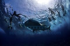 2014 04 VOISIN MALDIVES-8151