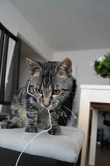 le chat & les ficelles ... (LucieLune) Tags: game cat chat jeux ficelle