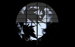 The beauty of the moonlight (Yukimi shiyouji) (karakutaia) Tags: sun tree love nature japan paper temple tokyo heart afotando flickraward flickrglobal allbeautifulshotsandmanymoreilovenature flowerstampblackandwhite transeguzkilorestreetarturbanagreatshotthisisexcellentcontestmovementricohgxrserendipitygroupbluenatureicapturecardjapanesepapercardflickraward5jtrasognoerealtabstractelementsorganizersimplysuperb