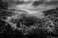 Sdersen (AndreasNikon) Tags: blackandwhite fog forest landscape sweden ngc nocrop landskap ngg sdersen svartvitt nohdr nikond600 skanecounty
