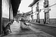 Maana con aroma a caf (Jos_MiguelR) Tags: blackandwhite nikon colombia salento streetshot streetdog