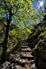 """A beautiful trail throught the """"Hell's Valley"""" - Schner Wanderweg durchs Hllental (W_von_S) Tags: sun alps green germany landscape bayern deutschland bavaria spring cabin outdoor sony htte may trail mai alpine grn alpen landschaft sonne werner frhling pfad zugspitze hllental hllentalklamm 2016 hellsvalley hllentalangerhtte alpinecabin hellsvalleygorge wvons alpha7rm2"""