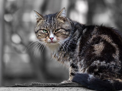 Street cat 132 (Yalitas) Tags: pet cats cat canon kat feline chat kitty gato felino katze katzen kot kedi kass gatta streetcat kotka  kocka  katte  katzchen kottur