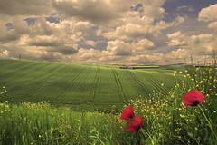 (rino_savastano) Tags: nuvole campagna cielo paesaggio papaveri