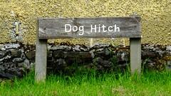 dog hitch (byronv2) Tags: park wood dog rural scotland countryside glasgow hitch milngavie mugdock hitchingpost mugdockcountrypark doghitch