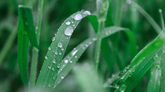 Tears (domjuniorlemma) Tags: wood morning flowers autumn trees winter red summer sun flower tree green fall nature colors grass leaves animals yellow forest photoshop canon garden insect photography photo leaf reflex spring branch violet insects photograph rays mothernature chlorophyll clorophilla