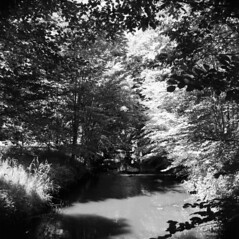 The Local Stream III (holtelars) Tags: mamiya mamiyac330 tlr twinlensreflex twinlens mamiyasekor 65mm f35 6x6 square squareformat 120 film analog foma fomapan fomapan100 fomapan100professional 100iso mediumformat analogue blackandwhite classicblackwhite bw monochrome filmforever filmphotography compardr09spezial r09spezial rodinalspecial studional larsholte homeprocessing stream niv denmark nive