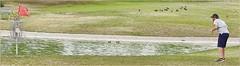 1279 (AJVaughn.com) Tags: fountain grass alan del golf james j championship jump memorial fiesta tour camino outdoor lakes beta hills national vista scottsdale disc vaughn foutain pdga 2016 ajvaughn ajvaughncom alanjv