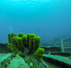 GOPR0267 (Bo Cherry) Tags: water coral underwater scuba shipwreck reef