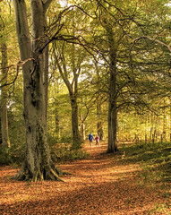 Light and Shade (Glenn D Reay) Tags: trees woods autumn woodland beamish leaves shadow light walking pentaxart pentax k30 sigma1770hsm glennreay