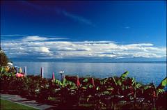 Sdsee-Flair am Bodensee (Thaddl) Tags: blue trees vacation sky film analog germany palms holidays urlaub slide nikonf100 analogue thealps alpen blau polarizer bodensee bume latesummer palmen diapositiv meersburg lakeconstance polfilter sptsommer 3570mmf3345af fujichromeprovia400x nikkor3570mm13345 reflectaproscan7200 silverfast6aistudio heliopandigitalpolcircular