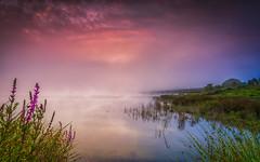 Among sun and fog (Explored) (Eduardo Regueiro) Tags: amanecer cecebre coruaamanecer1424 galicia nubes sun fog mist niebla pantano reflejos reflection clouds peace tranquility solaz calma verano sumer sunrise