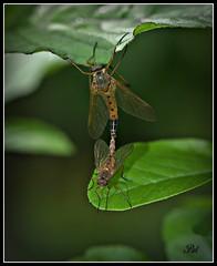 Macro (patrick.verstappen) Tags: macro garden photo leaf google nikon belgium sigma insects picassa gingelom ipernity d5100 pinterest ipiccy