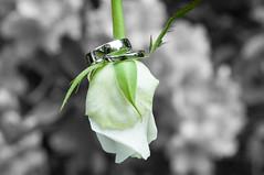 Artistic Wedding Photos (sebmckie) Tags: wedding flower colour rings stalk lightroom selectivecolour artisticweddingphotography