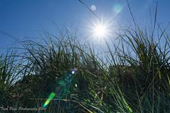 Solstice Eve (trishp97) Tags: light sky sun beach nature spring solstice starburst