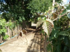 Meizu M3 Note review picture sample images