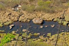 Little Fox Creek Detail (MIKOFOX  Catching Up!) Tags: canada water rock landscape spring may yukon spruce marshgrass xt1 littlefoxcreek fujifilmxt1 xf18135mmf3556rlmoiswr mikofox