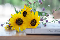 Summer Morning (Suu's) Tags: morning bokeh sunflower