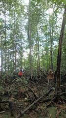 Old mature mangrove at Pulau Ubin (wildsingapore) Tags: nature island marine singapore underwater wildlife coastal shore intertidal mangroves seashore pulau marinelife ubin wildsingapore