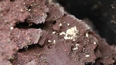 Welsh Garden (fillbee) Tags: macro canon eos nest mark iii ants eggs 5d compost