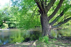 Long Pond, Eltham Park North (zawtowers) Tags: park green london water sunshine walking 1 pond warm long walk space exploring capital north july saturday ring 2nd showers stroll section feature parkland amble eltham 2016 woolwichfoottunneltofalconwood