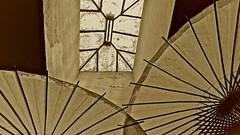 Skylight and Parasols ... (sswj) Tags: abstractreality skylight parasol availablelight naturallight monochrome sepia leica dl4 scottjohnson sangregoriostore northerncalifornia composition architecturaldetail raw
