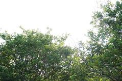 DSC01926 (numb3r) Tags: belize btb belizetourism wildlife rainforest mayan temples jungle belizezoo placencia belizecity authenticbelize tapir tucan