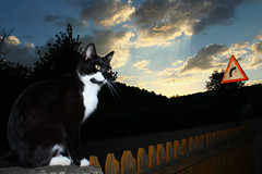 #Sunset (Anny-justme) Tags: road sunset sky signs nature silhouette clouds cat fence landscape directions flickrfriday