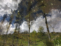 Treestars (andressolo) Tags: trees distortion reflection tree water clouds reflections stars lago star pond agua distorted reflected reflect reflejo laguna reflejos distortions