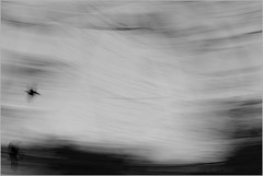 final curtain (nevil zaveri) Tags: longexposure autumn trees sky blackandwhite bw india abstract tree bird nature monochrome birds animals photography fly blog long exposure photographer display photos wildlife flock stock flight trails starling images motionblur photographs photograph crow wilderness conceptual skyscapes crows raven zaveri ravens metamorphosis gujarat stockimages travelogue rosy jamnagar gujrat nevil saurashtra nevilzaveri