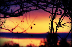 31 Oct 2012 Sunrise (~*~ MagpiesNest) Tags: blue nature sunrise gold purple pixlr